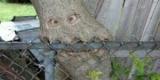 Відстань до паркану від дерев. Планування ділянки
